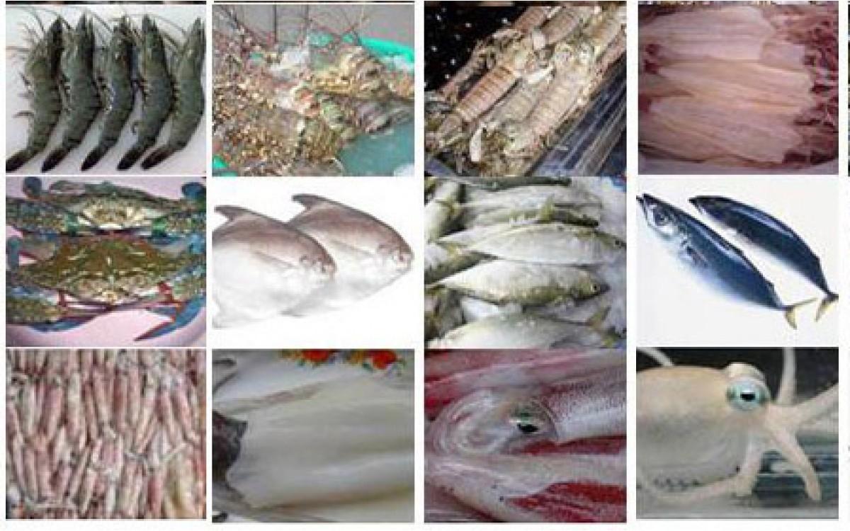 """Bảo quản hải sản tươi sao cho """"CHUẨN"""""""